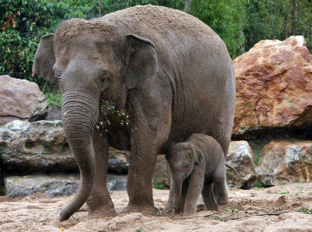 Nayan the Elephant