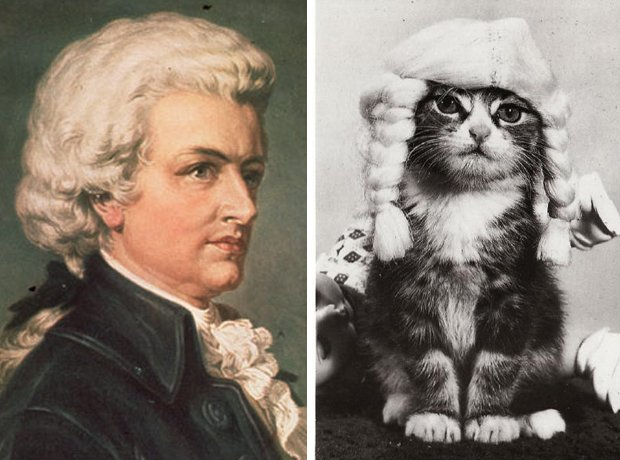Cat composer lookalike Mozart
