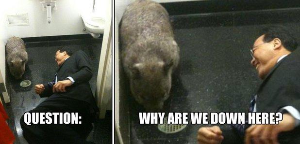 yo-yo ma with a wombat