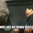 yo-yo ma with a wombat